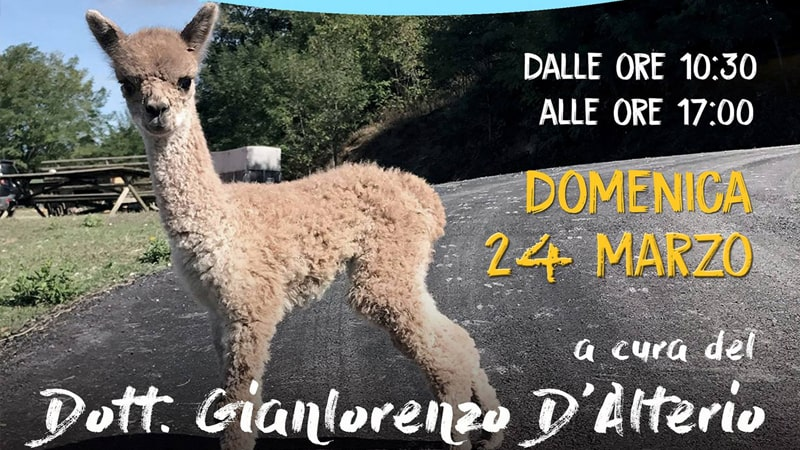 Corso Veterinario sull' Alpaca con Gian Lorenzo D'Alterio